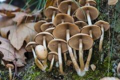 Cogumelos pequenos Imagens de Stock Royalty Free