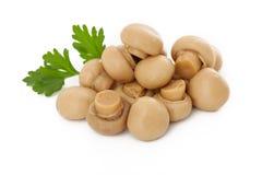 Cogumelos pequenos Fotografia de Stock Royalty Free