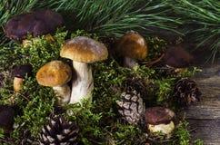 Cogumelos poloneses e brancos em um fundo de madeira 2 imagens de stock royalty free