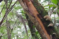 Cogumelos que crescem em um tronco de árvore Foto de Stock