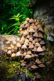 Cogumelos que crescem na floresta Fotografia de Stock Royalty Free