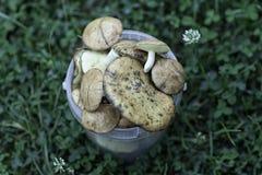 Cogumelos recolhidos no local imagem de stock