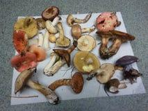 Cogumelos ruins imagens de stock