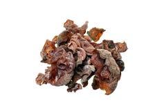Cogumelos saudáveis Imagem de Stock Royalty Free