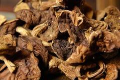 Cogumelos secados Fotografia de Stock