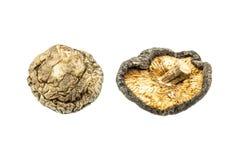 Cogumelos secados Imagem de Stock