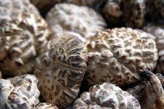 Cogumelos secados chineses Fotografia de Stock Royalty Free