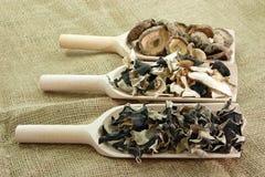 Cogumelos secados de Ásia Imagens de Stock Royalty Free