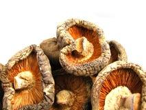Cogumelos secados de Shitake Imagens de Stock Royalty Free