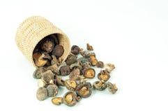 Cogumelos secos Foto de Stock