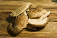 Cogumelos selvagens Foto de Stock