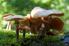 Cogumelos selvagens fotografia de stock royalty free