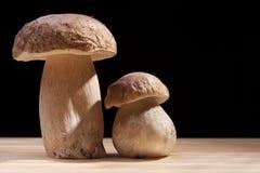 Cogumelos selvagens Imagem de Stock