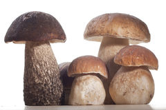 Cogumelos selvagens Fotografia de Stock