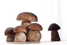 Cogumelos selvagens Fotos de Stock Royalty Free