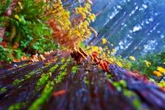 Cogumelos selvagens Imagem de Stock Royalty Free