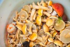 Cogumelos selvagens comestíveis na cesta na floresta Fotografia de Stock Royalty Free