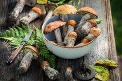 Cogumelos selvagens comestíveis recolhidos no outono Imagem de Stock Royalty Free