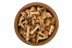 Cogumelos selvagens em uma bacia velha da argila Imagens de Stock Royalty Free
