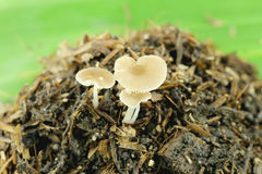 Cogumelos selvagens na terra Fotos de Stock
