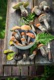 Cogumelos selvagens nobres com a samambaia verde da floresta Imagem de Stock