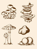 Cogumelos tirados mão da floresta do vintage Fotografia de Stock