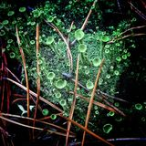 Cogumelos verdes Foto de Stock Royalty Free