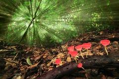 Cogumelos vermelhos do copo Imagem de Stock
