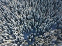 Cohetes de la nieve - bosque congelado fotos de archivo