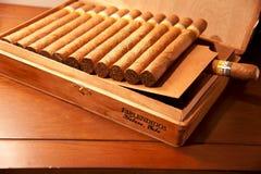Cohiba Esplendidos cigarrer i det trä boxas Arkivbild