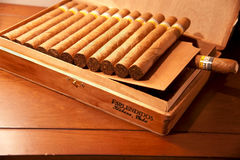 Cohiba Esplendidos Cigars in the wooden box Stock Photography
