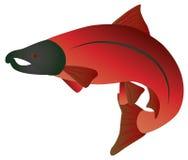 Coho łososia koloru wektoru ilustracja ilustracji