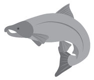 Coho Salmon Grayscale Vector Illustration Royalty Free Stock Photos
