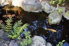 Coi-Fische in einem japanischen Garten lizenzfreie stockfotografie
