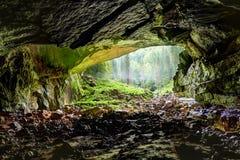 Coiba stogrotta i Rumänien, ingång Royaltyfria Foton