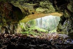 Coiba stogrotta i Rumänien, ingång Arkivfoto