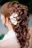 coiffure nuptiale image stock