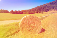 Coil of hay in the field after the grain harvest in Germany. Royalty Free Stock Images