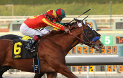 Coil Wins The 2013 San Pasqual Stakes Stock Images