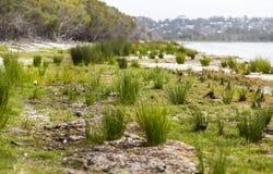 Coila湖边 Bingie NSW 澳洲 免版税库存照片
