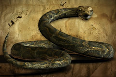 The Coiled Python (with Clipping Path) Royalty Free Stock Images