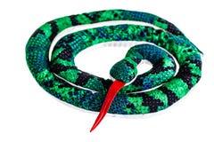 Coiled rag snake Royalty Free Stock Image