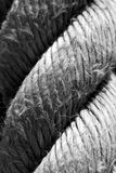 Coiled rope Stock Images
