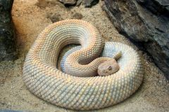 Coiled Snake Stock Photos