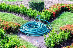 Coiled water hose in garden.  royalty free stock photography