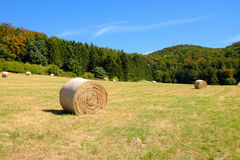 Coils of hay in the field after the grain harvest in Germany. Coils of hay in the field after the grain harvest in Germany with forest on the background Stock Photo