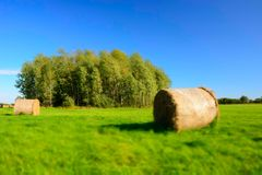 Coils of hay on a green meadow, copse and blue sky - blur and contrasting colors. Coils of hay on a green meadow, copse and cloudless blue sky - blur and royalty free stock photography