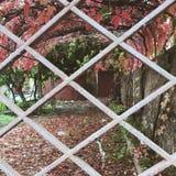 Coimbra Fotografering för Bildbyråer