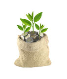 Coin in the bag and green treetop. Royalty Free Stock Images