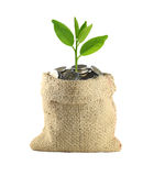 Coin in the bag and green treetop. Stock Photography